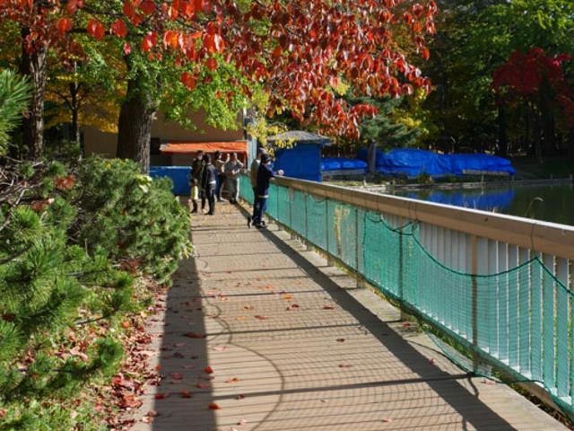 中島公園の紅葉_中島公園