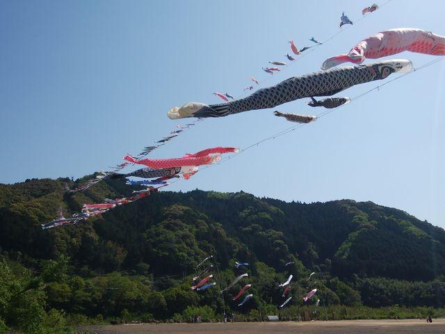 屋根より高い鯉のぼり~_こいのぼり公園