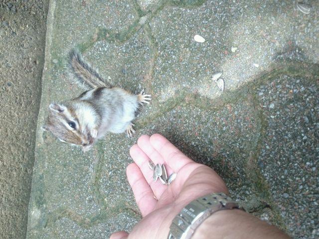 入場無料のリス園 ひまわりの種の餌やり とても可愛いリス_加茂山公園