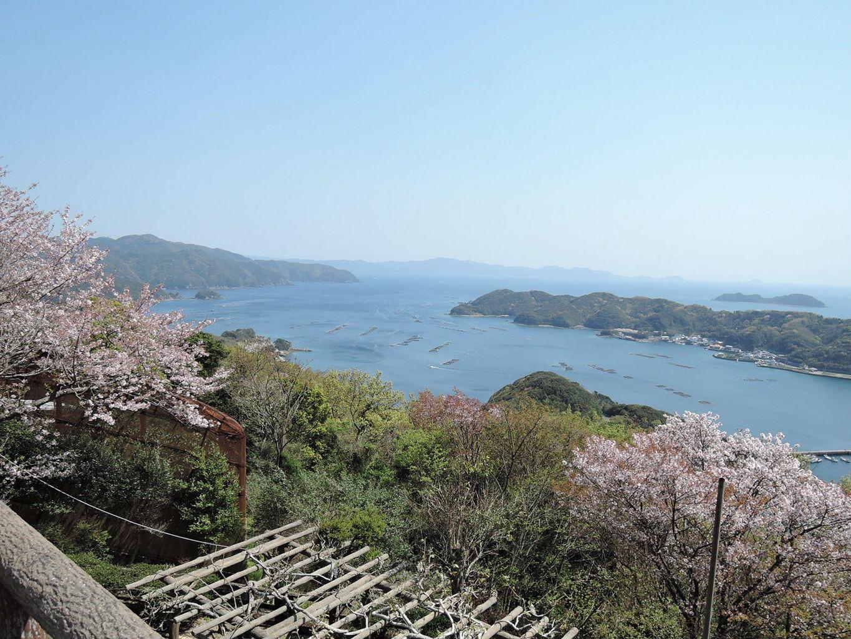 高茂岬への沿線道の桜