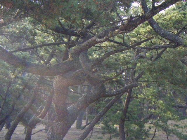 虹の松原_東の浜海浜公園