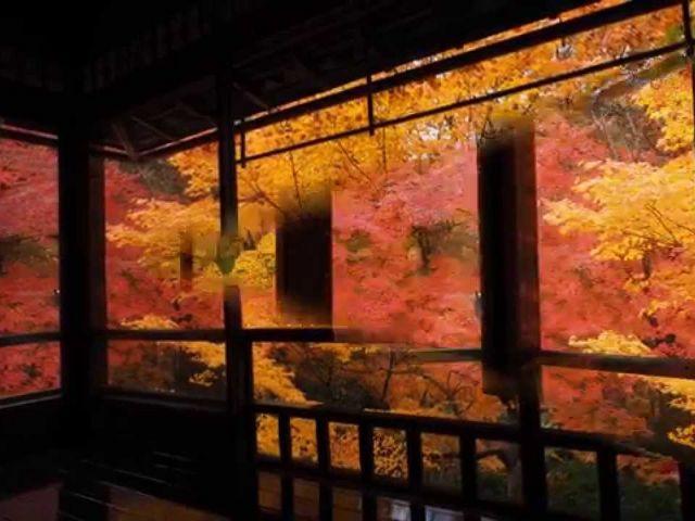 春なら若葉色、夏なら深緑、冬なら白い。_瑠璃光院
