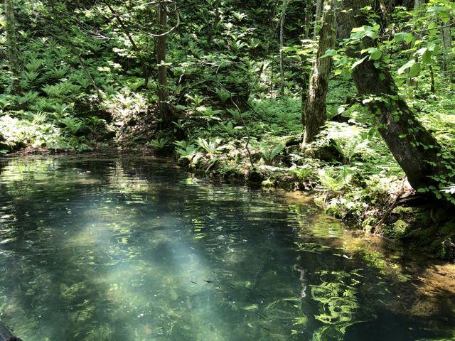 良く見ると水中には魚の群れが_ィ トムカの入り江