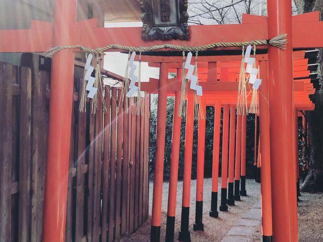 光が当たり神秘的でした! 行って良かったです★_堀越神社