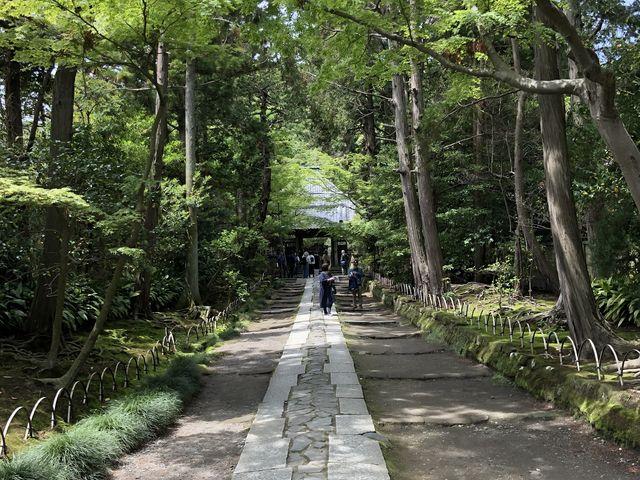 お寺までの道。新緑が素敵でした。_寿福寺