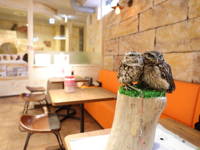 小さいフクロウちゃんたち。_ふくろうのいるカフェ天神