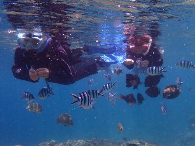 初日の魚のエサやり。たくさん集まってきたー!_ダイビングショップ SeaFree
