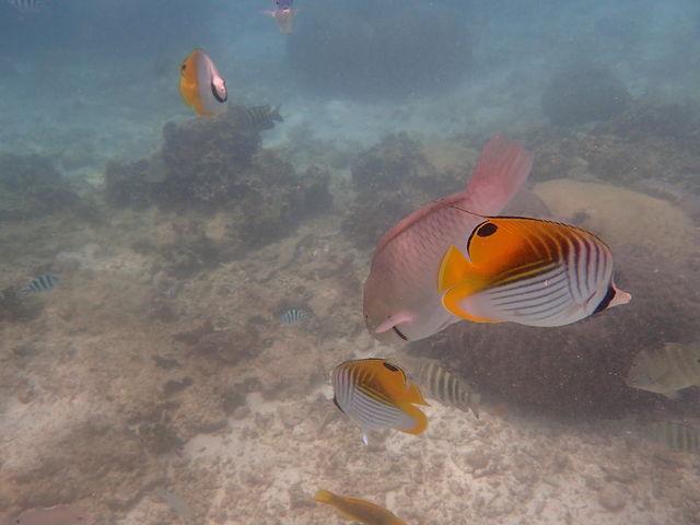 熱帯魚がたくさん観れた!!!_ダイビングショップ SeaFree