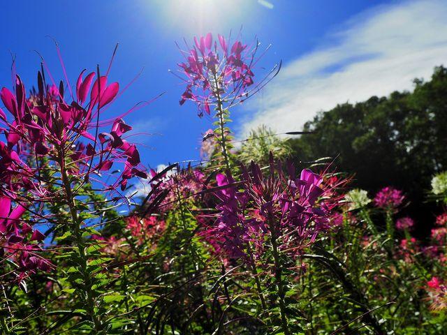 コスモスの他にも色んな花が _治部坂高原100万本のコスモス