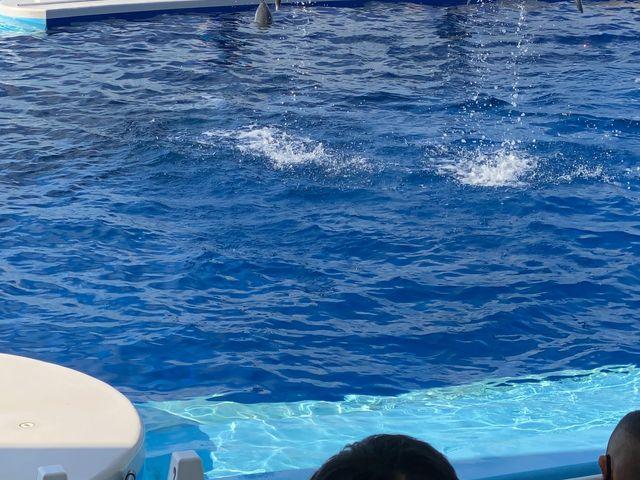 また練習中のイルカショウです。素人っぽいのがウケてました。_四国水族館