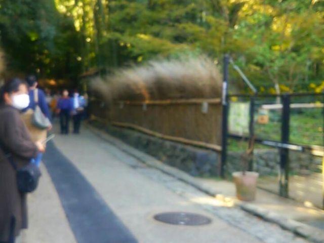 竹林の入り口♪_竹林の道