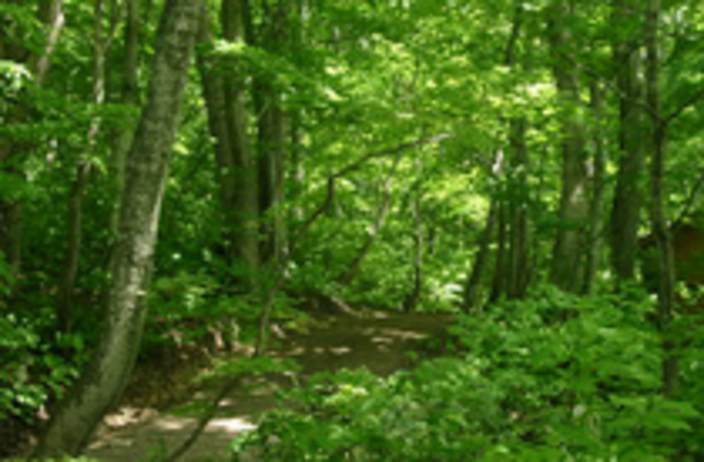 白神の森遊山道
