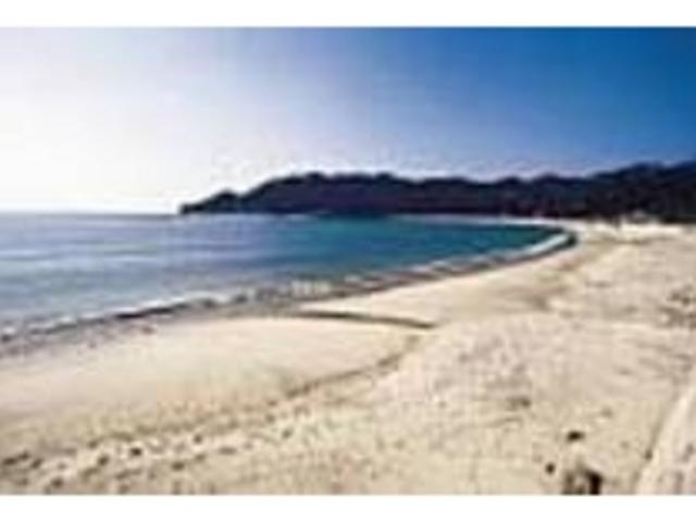 1度は海ガメの産卵風景も見てみたいもの_手打海岸