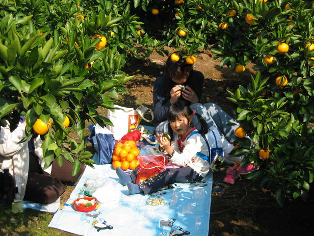 みかん園でのお弁当はおいしいですよ!_あかざと園