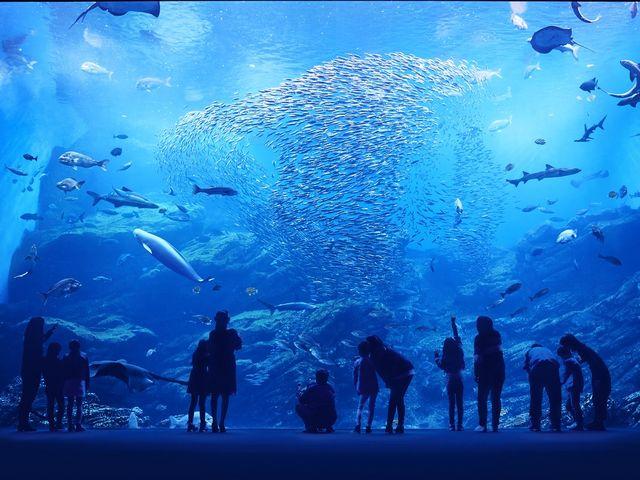 大水槽「いのちきらめく うみ」_仙台うみの杜水族館