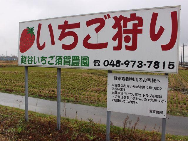 越谷いちご須賀農園