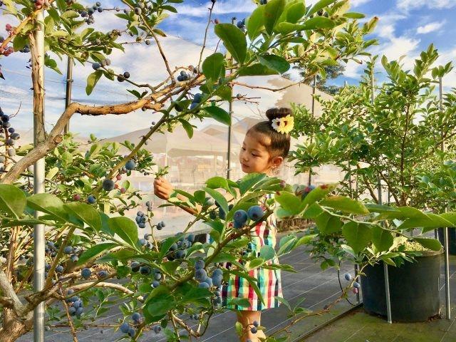 アリスの果実園