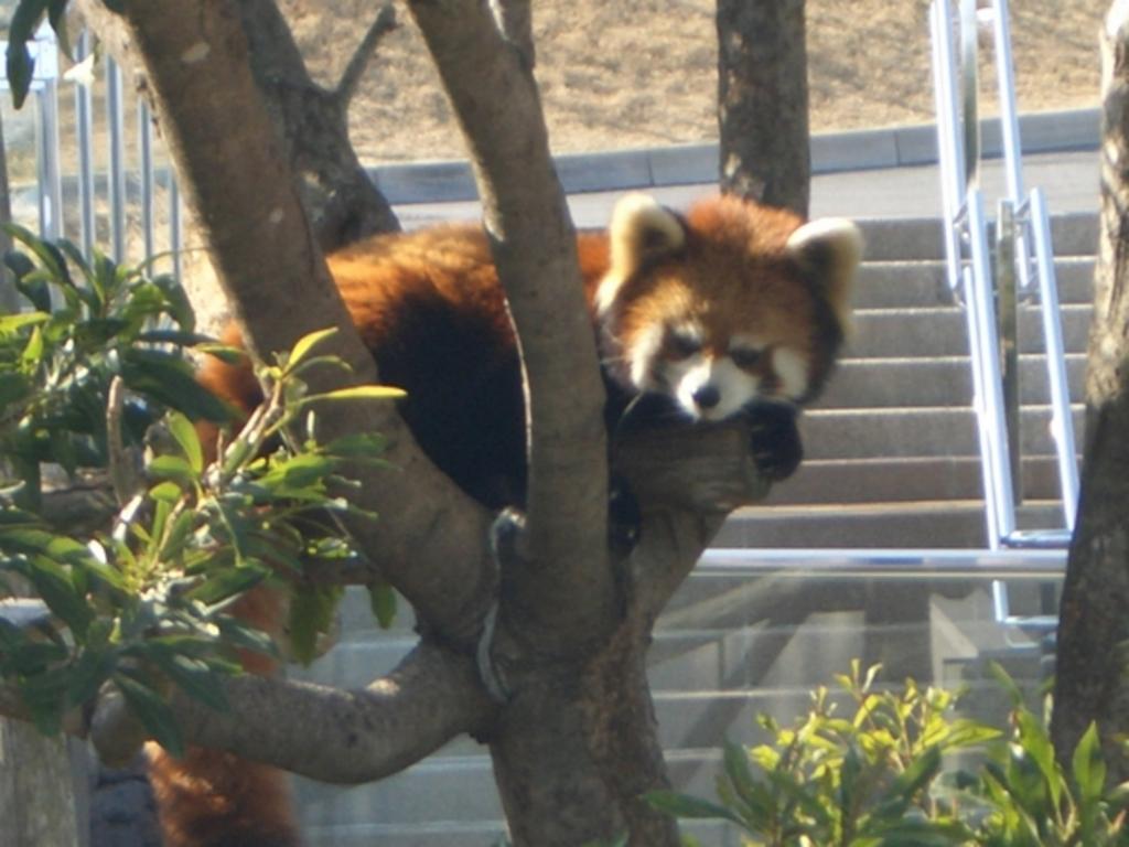 大島公園動物園