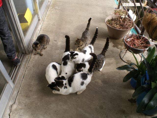 どの猫も太っていて、かわいかった。_鋸山