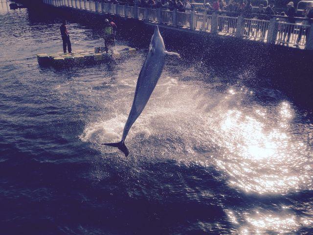 イルカが園外で見れた◎_いおワールドかごしま水族館