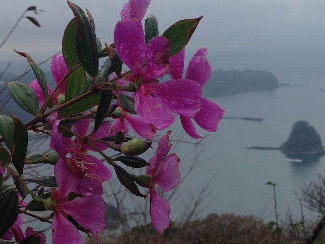 下田の海とリトルエンジェル_寝姿山展望台