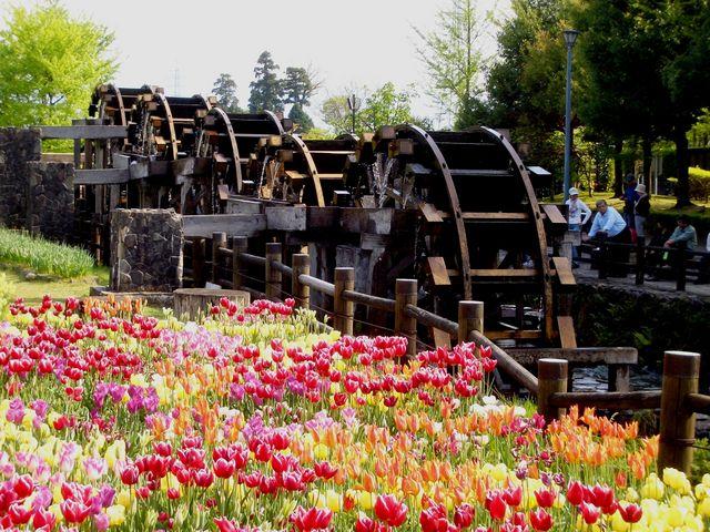 五重連の水車をのんびり眺めながらの一休み。_砺波チューリップ公園