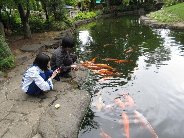 鯉の餌は200円です (ガチャガチャが近くに有ります)_ハーブ庭園旅日記