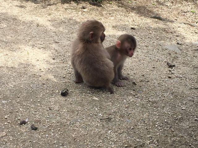小豆島銚子渓自然動物園 お猿の国