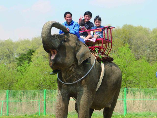 ゾウライド 年齢制限ありません どなたでも乗れます。_那須ワールドモンキーパーク
