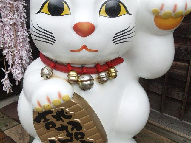 招き猫パワーで福来てね。_吉兆招福亭