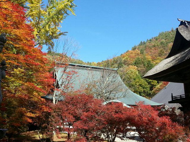 この写真よりもドウダンツツジがもっと赤く染まります。_霊松寺