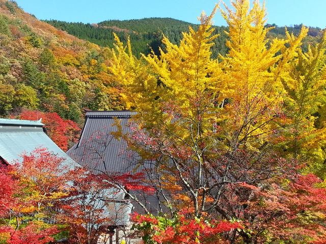 お天気に恵まれれば青い空と紅葉がとても綺麗です。_霊松寺