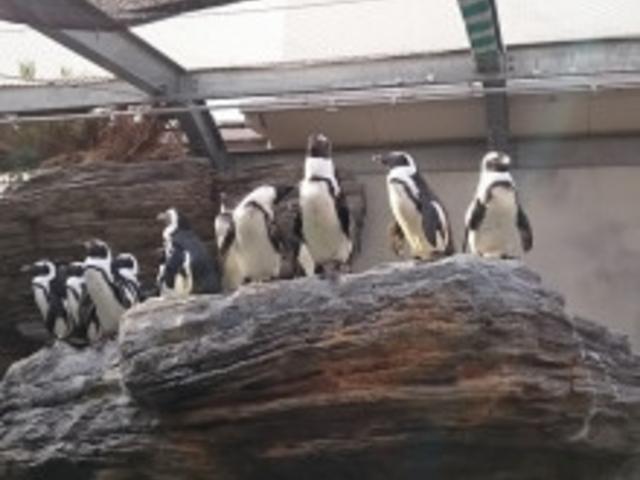 ペンギンビーチ_サンシャイン水族館