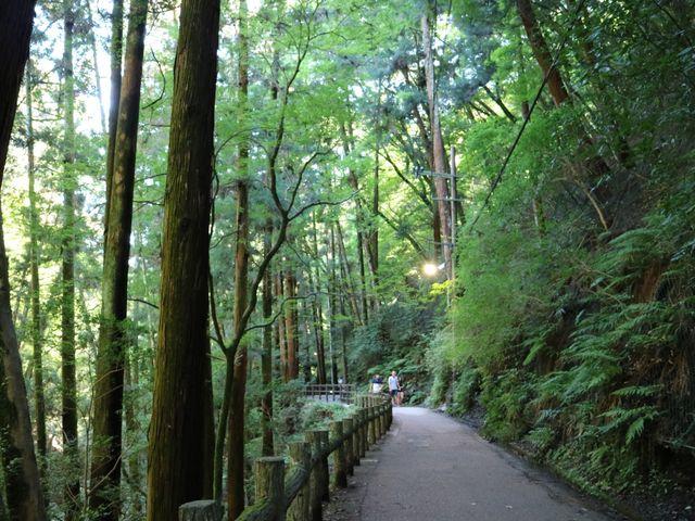 滝へと続く道_明治の森箕面国定公園(箕面の滝)