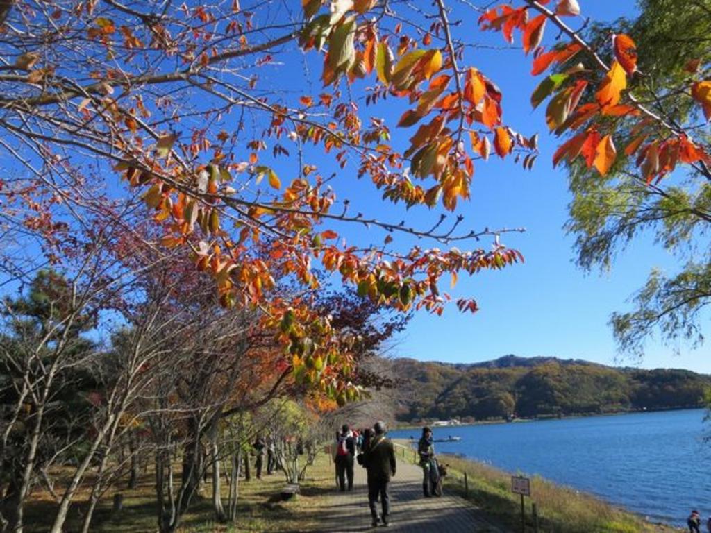河口湖湖畔遊歩道