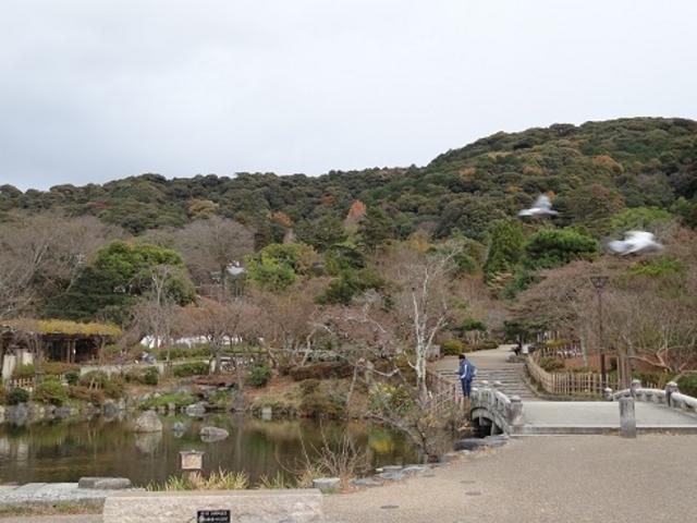 瓢箪池_円山公園