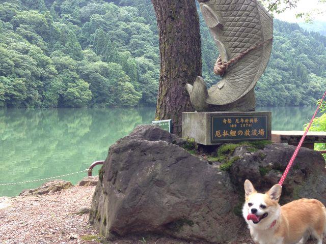 鯉で有名だよ_庄川水記念公園