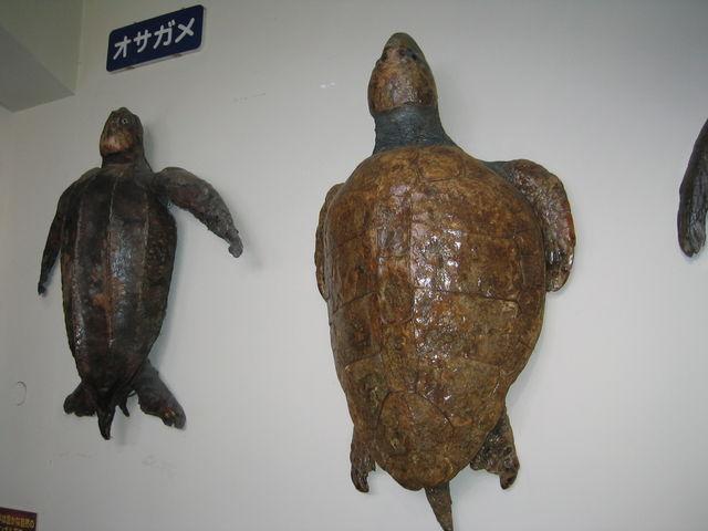 姫路市立水族館_姫路市立水族館