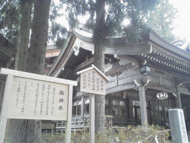 御神木と拝殿(*^▽^*)_白山比め神社
