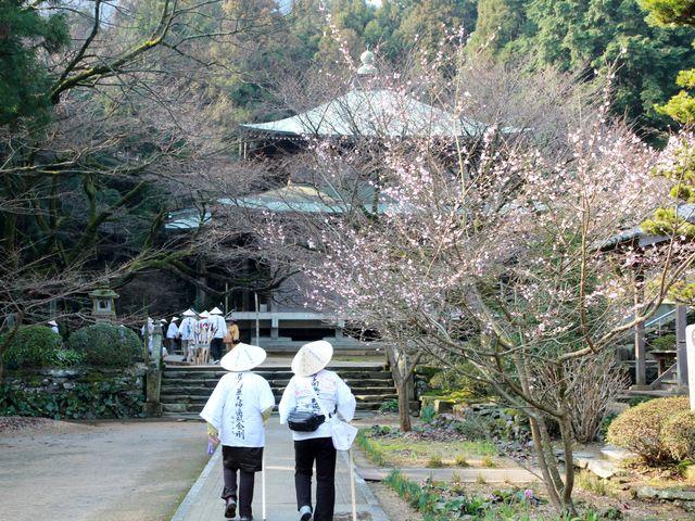 梅の花を眺めながら御遍路さん_三角寺
