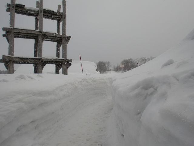 新幹線の乗車の待ち時間にバスで見学に行きました。雪の中の三内丸山遺跡見学もなかなか良いものですよ。_三内丸山遺跡