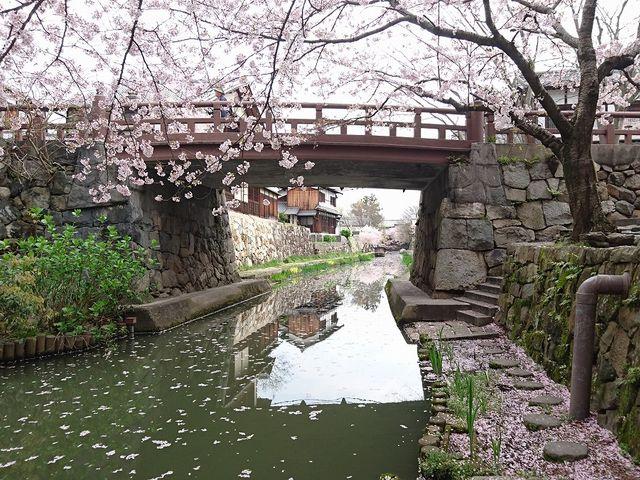 はちまん橋の下_八幡堀