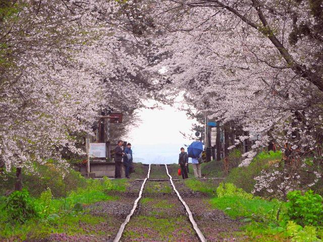 芦野公園の桜】アクセス・営業時...