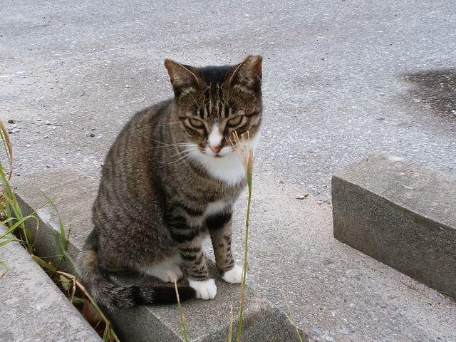 人懐っこい猫さん_奥武島