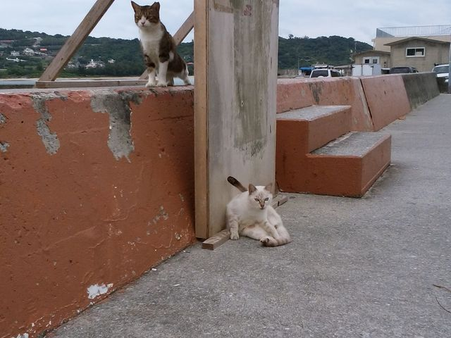 くつろぐ猫さん_奥武島