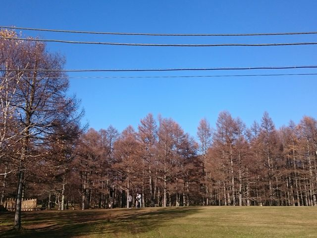お土産さんの隣に立派な芝生。_三本松茶屋