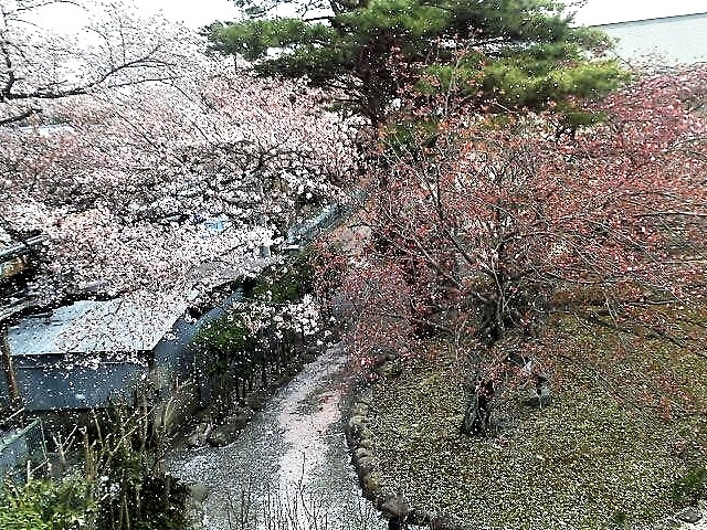 桜吹雪_湯元グリーンホテル