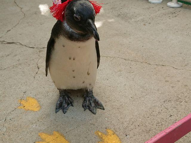 ペンギンのお散歩_東北サファリパーク
