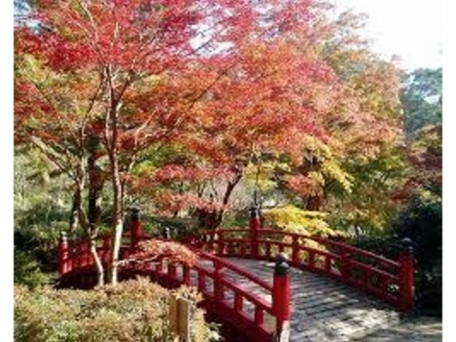 紅葉_熱海梅園の紅葉