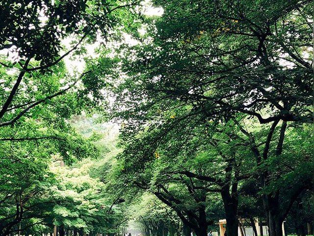 緑いっぱい_光が丘公園